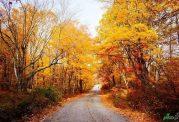 چگونه در فصل پاییز سالم و ارزان تفریح کنیم؟