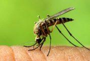 نوزادتان مبتلا به ویروس زیکا است؟پس دچار بیماری میکروسفالی میشود