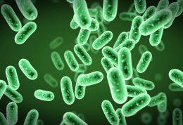 4 روش برای ورود باکتری های مبارزه کننده با سرطان سینه به بدن
