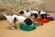 اصول مراقبت از توله سگ ها
