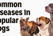 حفاظت از سگ در برابر بیماری