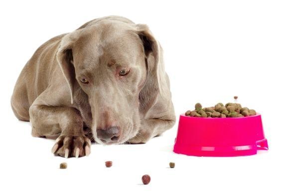 چرا سگ من غذا نمیخورد؟