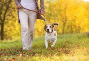 تجهیزات مورد نیاز برای یک سگ خانگی