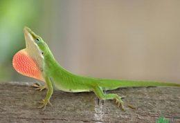 حفاظت از انول های سبز