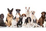 نژادهای مختلف سگ گارد