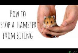 رفتار تهاجمی همستر