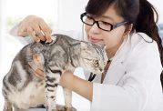 آموزش استفاده از دماسنج برای حیوان خانگی