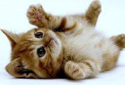 زندگی دوباره به گربه با ماساژ قلبی