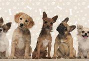 آشنایی با مشخصات سگ های اهلی قبل از خرید