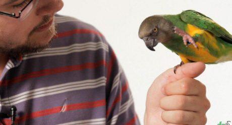 سخنگو شدن طوطی و کاسکو