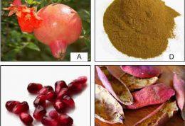 فواید مصرف جوشانده پوست انار