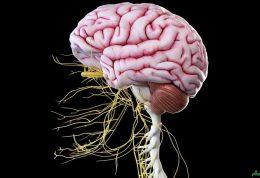 علامت هایی که نشان می دهد ممکن است آسیب عصبی ایجاد شده باشد