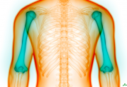4 نکته مهم که نشان می دهد استخوان های شما مشکل دارند