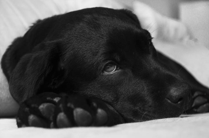 علاقه سگ های خانگی به سنگریزه