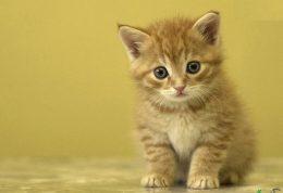 جوان ماندن گربه با این 10 نکته