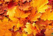 ارتقای سلامتی در فصل پاییز