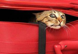 مسافرت هوایی با حیوان خانگی