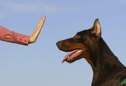 نگهداری از سگ های خانگی ناشنوا