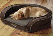 شرایط مهم برای محل خواب سگ