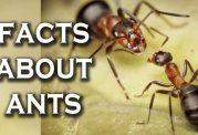 بررسی نحوه زندگی مورچه ها