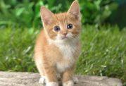 گربه های بصورت معمول این 5 کار عجیب را انجام میدهند