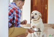 همه وسایل مورد نیاز برای مراقبت از سگ