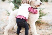 رفتار عاشقانه و احساسی سگ