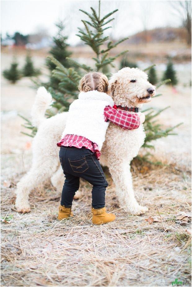 سگ عاشقانه