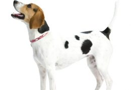 حفاظت از اعضای مختلف بدن سگ خانگی