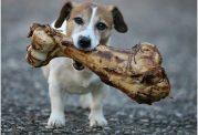 تهیه استخوان برای سگ خانگی
