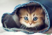یک گربه سالم چه ویژگیهایی دارد؟