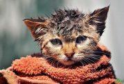 از کجا بفهمیم گربه سرما خورده است؟