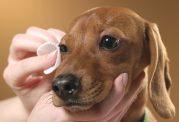 مراقبت از بینایی حیوان خانگی