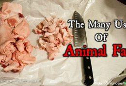 بررسی ارزش تغذیه ای چربی حیوانی