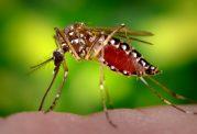 گزارش دیگری از وجود عفونت زیکا در فصل سرما