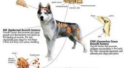 بررسی سیستم عصبی سگ ها