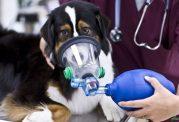 عارضه های تنفسی در حیوانات خانگی
