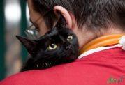 عوارض برخی داروها برای حیوانات خانگی