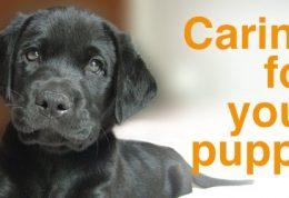 نیازهای مختلف یک سگ خانگی