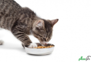 استفاده از غذای خشک برای گربه ها