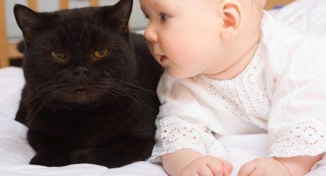 نگهداری از نوزاد با وجود گربه در خانه
