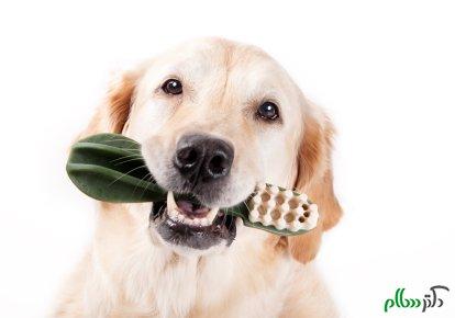 بیماری های مربوط به دهان و دندان حیوانات خانگی
