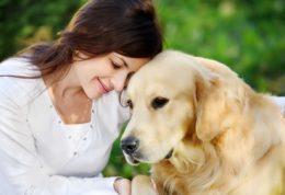 تاثیرات مفید نگهداری از سگ خانگی
