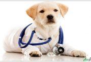 متداول ترین بیماریهای سگ