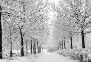 سرمای هوا شمار بیماران دیابتی را بالا میبرد