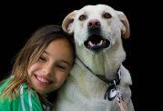 تمایل به خرید و نگهداری از سگ خانگی