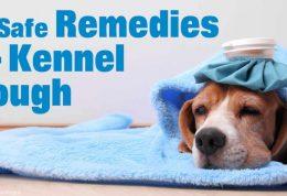 ایجاد بیماری عفونی در سگ های خانگی