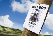 ناپدید شدن ناگهانی حیوانات خانگی