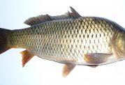 هشدار!در 60 درصد از  بستهبندیهای ماهی جیوه وجود دارد