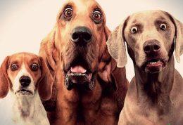 رفع اضطراب سگ خانگی